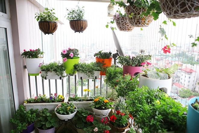 Vị trí trồng hoa lan