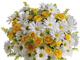 Hoa cúc - Bông hoa không thể thiếu trên bàn thờ ngày tết